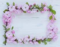 Les fleurs encadrent sur en bois blanc Images stock