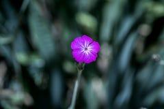 Les fleurs engazonnent le matin Photos libres de droits