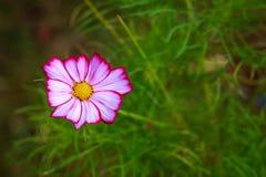 les fleurs est régénérante et belle Photographie stock