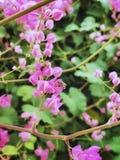 Les fleurs et les abeilles photographie stock libre de droits