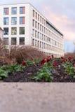 les fleurs et les bâtiments d'arbres autour d'une ville se garent en novembre à l'Au Photographie stock