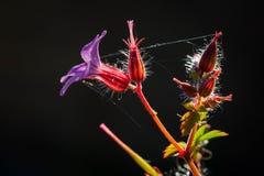 Les fleurs et les bourgeons brillent leurs couleurs merveilleuses Images libres de droits