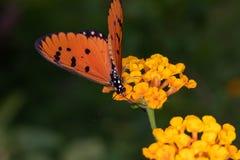 Les fleurs et les insectes sur le fond de tache floue en nature photo stock