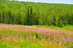 Les fleurs et les forêts Images stock