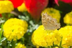 Les fleurs et les insectes en parc Image libre de droits