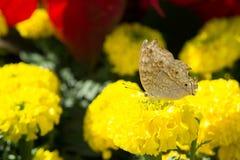 Les fleurs et les insectes en parc Photographie stock libre de droits