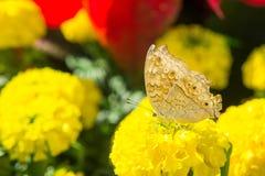 Les fleurs et les insectes en parc images stock