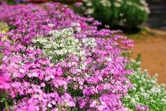 Les fleurs et les plantes fleurissent Images stock