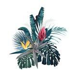 Les fleurs, les feuilles de monstera de paume, les ketmies et le protea tropicaux fleurissent illustration libre de droits