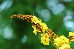 Les fleurs, feuilles, usines, nature, macro Images stock