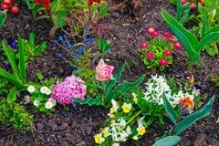 Les fleurs fleurissant dans la terrasse de jardin de Sanssouci se garent à Potsdam Photographie stock libre de droits