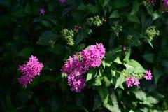 Les fleurs fleurissent pendant la saison d'élevage Photos libres de droits