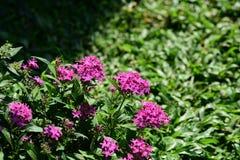 Les fleurs fleurissent pendant la saison d'élevage Photographie stock