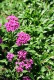 Les fleurs fleurissent pendant la saison d'élevage Photo libre de droits