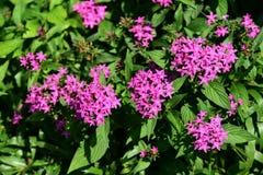 Les fleurs fleurissent pendant la saison d'élevage Photo stock