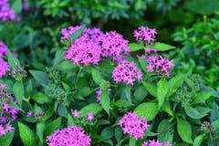 Les fleurs fleurissent pendant la saison d'élevage Photographie stock libre de droits