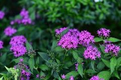 Les fleurs fleurissent pendant la saison d'élevage Images stock