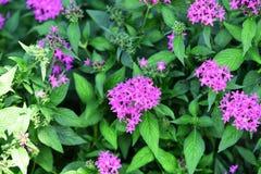 Les fleurs fleurissent pendant la saison d'élevage Image stock