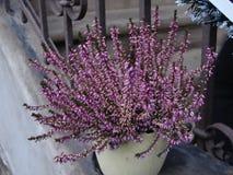 Les fleurs gentilles de Blumen font du jardinage beau images stock