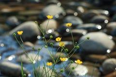 Les fleurs jaunes sur le côté d'une montagne coulent Image stock