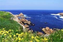 Les fleurs jaunes sur une herbe ont couvert la falaise Photographie stock