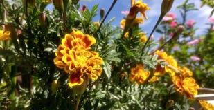 Les fleurs jaunes vibrantes et une partie part Photographie stock libre de droits
