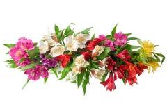 Les fleurs multicolores d'alstroemeria s'embranchent sur la fin d'isolement par fond blanc  image libre de droits