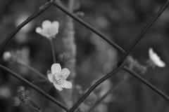 Les fleurs noires et blanches photographie stock