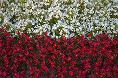Les fleurs ont stylisé dans le drapeau polonais Photographie stock