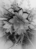 Les fleurs ont tiré dans un type d'beaux-arts dans un studio Photos libres de droits