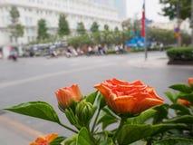 Les fleurs oranges à l'arrière-plan sont des routes Photographie stock