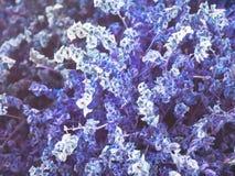 Les fleurs pourpres artificielles est fond image stock
