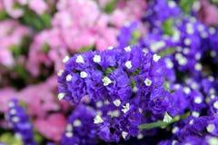 Les fleurs pourpres et roses dans le bouquet sur le marché Image libre de droits