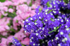 Les fleurs pourpres et roses dans le bouquet sur le marché Photo libre de droits