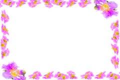 Les fleurs pourpres s'embranche cadre d'isolement sur le fond blanc Photos stock