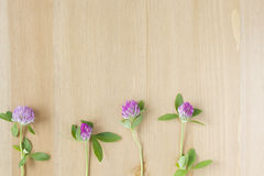 Les fleurs pourpres sauvages ont arrangé dans une rangée sur le fond en bois Vue supérieure Configuration plate image libre de droits