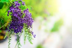 Les fleurs pourpres sont duvet léger image stock