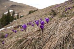 Les fleurs qui annoncent l'arrivée du ressort image stock