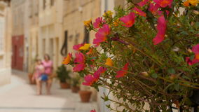 Les fleurs roses décorent la rue lumineuse un jour ensoleillé banque de vidéos
