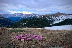 Les fleurs roses et la neige de trèfle alpin ont couvert des montagnes sur le passage de l'indépendance près d'Aspen photo libre de droits