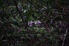 Les fleurs roses fleurissant dans la forêt images libres de droits