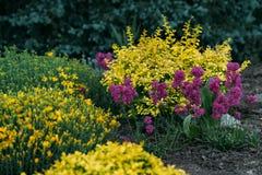 Les fleurs roses, pourpres et jaunes se développent dans le jardin Jardin botanique Image stock
