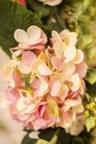 Les fleurs roses sont avec le fond de mur de briques Photos libres de droits