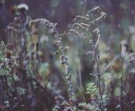 les fleurs sèches Photo libre de droits