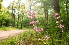 Les fleurs sauvages se développent au coeur de la nature images libres de droits