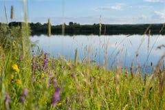Les fleurs sauvages se développent sur la banque de la rivière Photo libre de droits