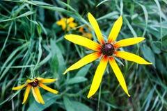 Les fleurs sauvages se ferment sur le fond d'herbe verte en été images stock