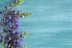 Les fleurs sauvages se ferment vers le haut du fond avec l'espace de copie pour le texte photo libre de droits