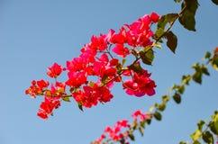 Les fleurs se développent sur le beache Photo libre de droits