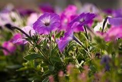 Les fleurs se ferment Image stock